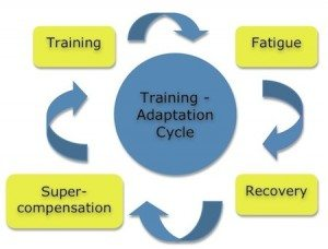 Training and recovery cycle