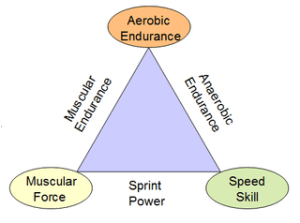 Joe Friel's Training Triangle