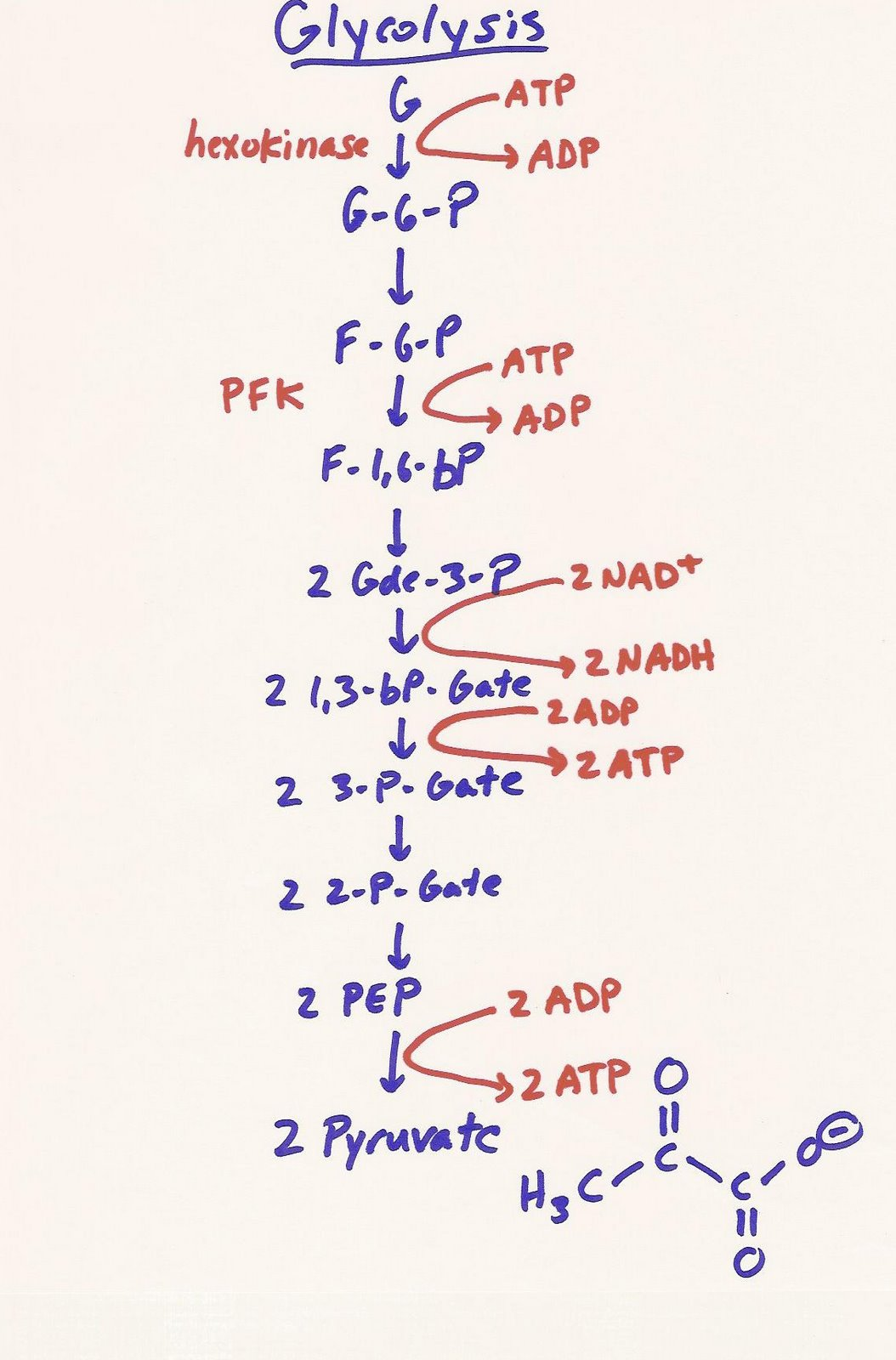 glycolysis mcat need energy memorize know lecture bio study pathway diagram systems pathways structures process basic biochemistry physiology biohacking biology